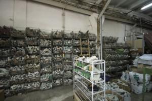 schoenfabriek roemenie - vervaardigen van herenschoenen3